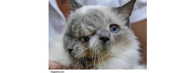kucing berwajah dua